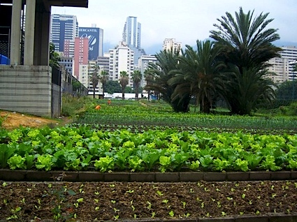 Urban Agriculture in Japan