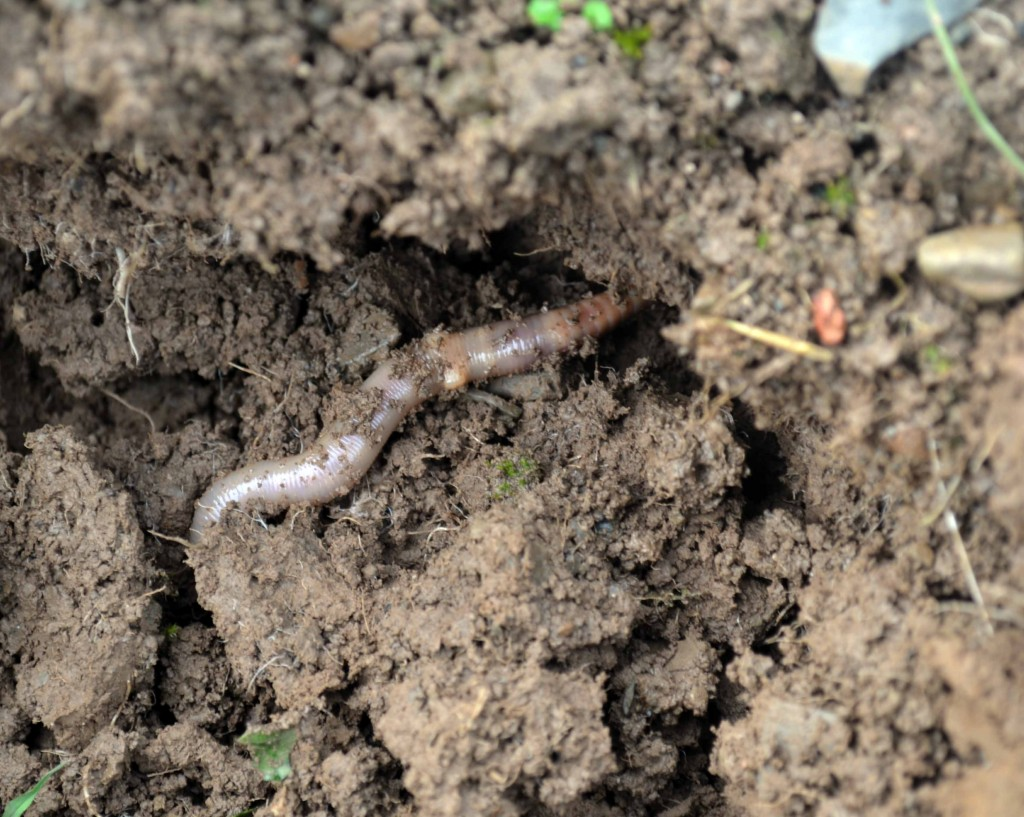 Ten facts about earthworms