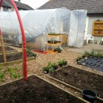 New structures in the community garden
