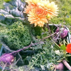 grow your own flowers and veg