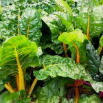 20 Tips to Help you in the Vegetable Garden