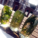 How to preserve herbs in vinegar