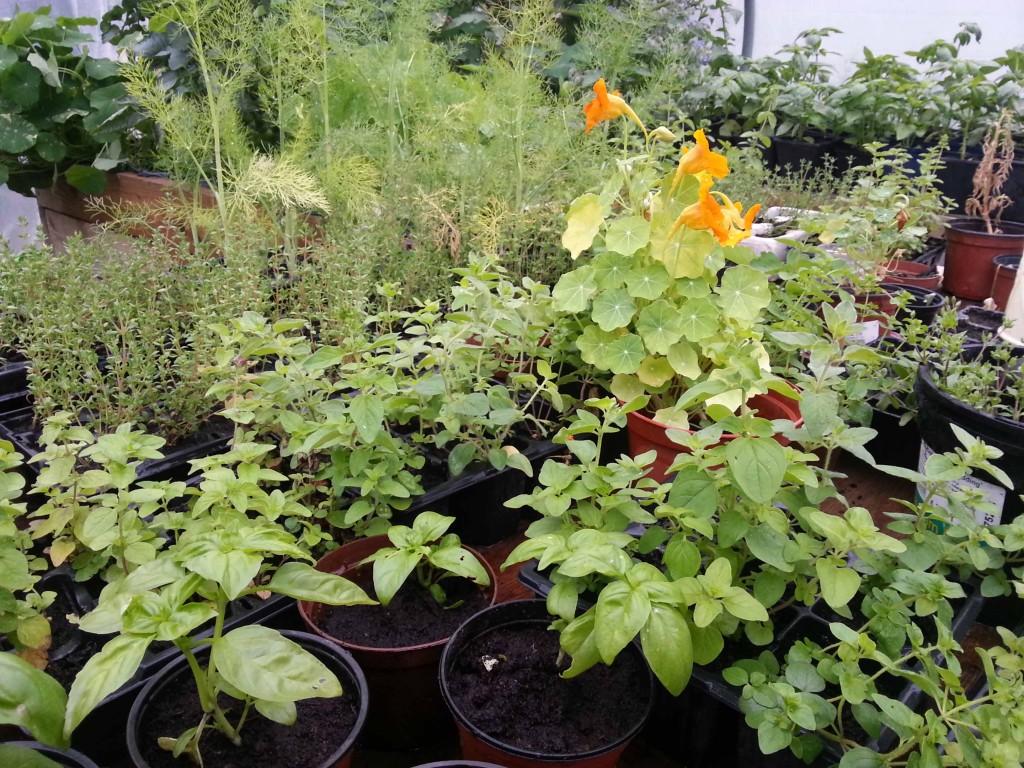 herbs(1)