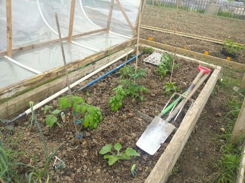 Hinged cloche / mini polytunnel