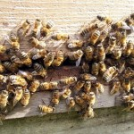 Beekeeping and the realities of becoming self sufficient
