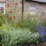 Kilgraney Herb Gardens – Beautiful and healing in many ways…
