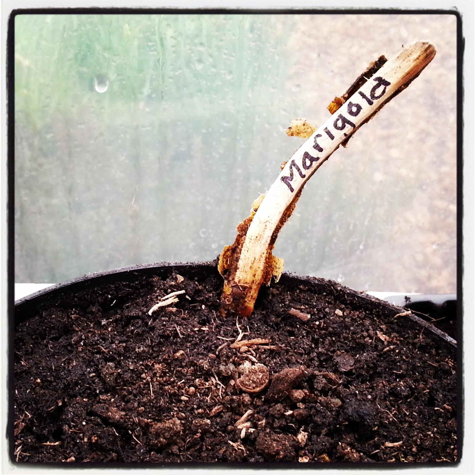 Label Seedlings