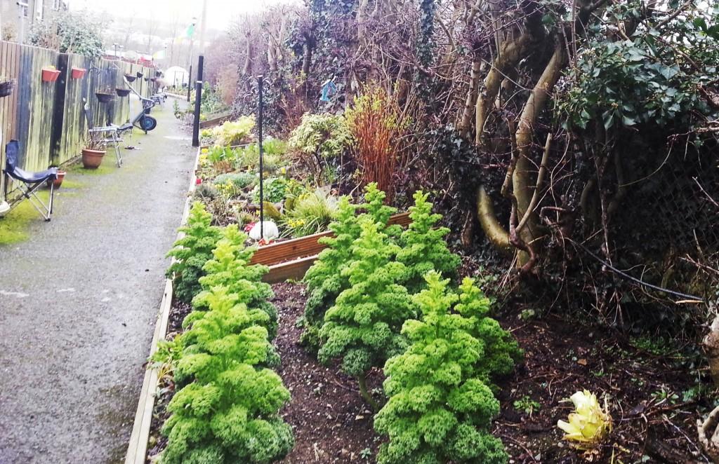 leafair laneway community garden