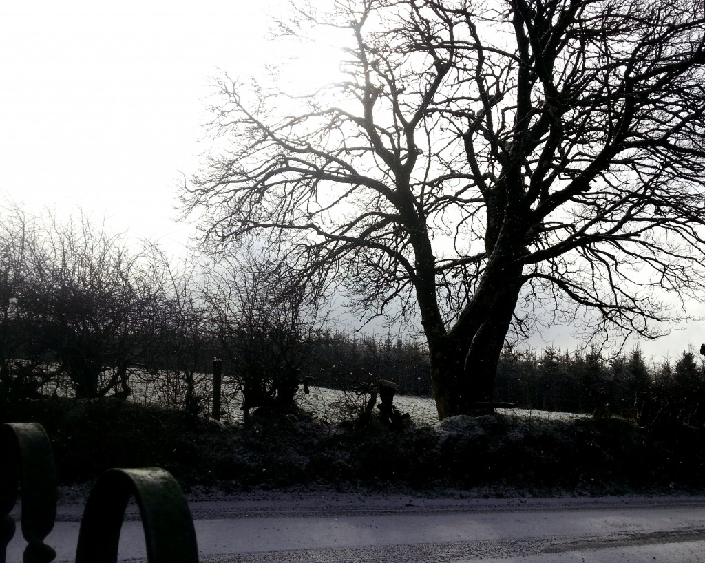 A tree in March in Baunreagh