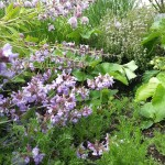 Versatile Herbs ~ Guest Blog for Countrylife.ie