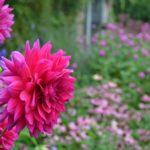 Dear Garden