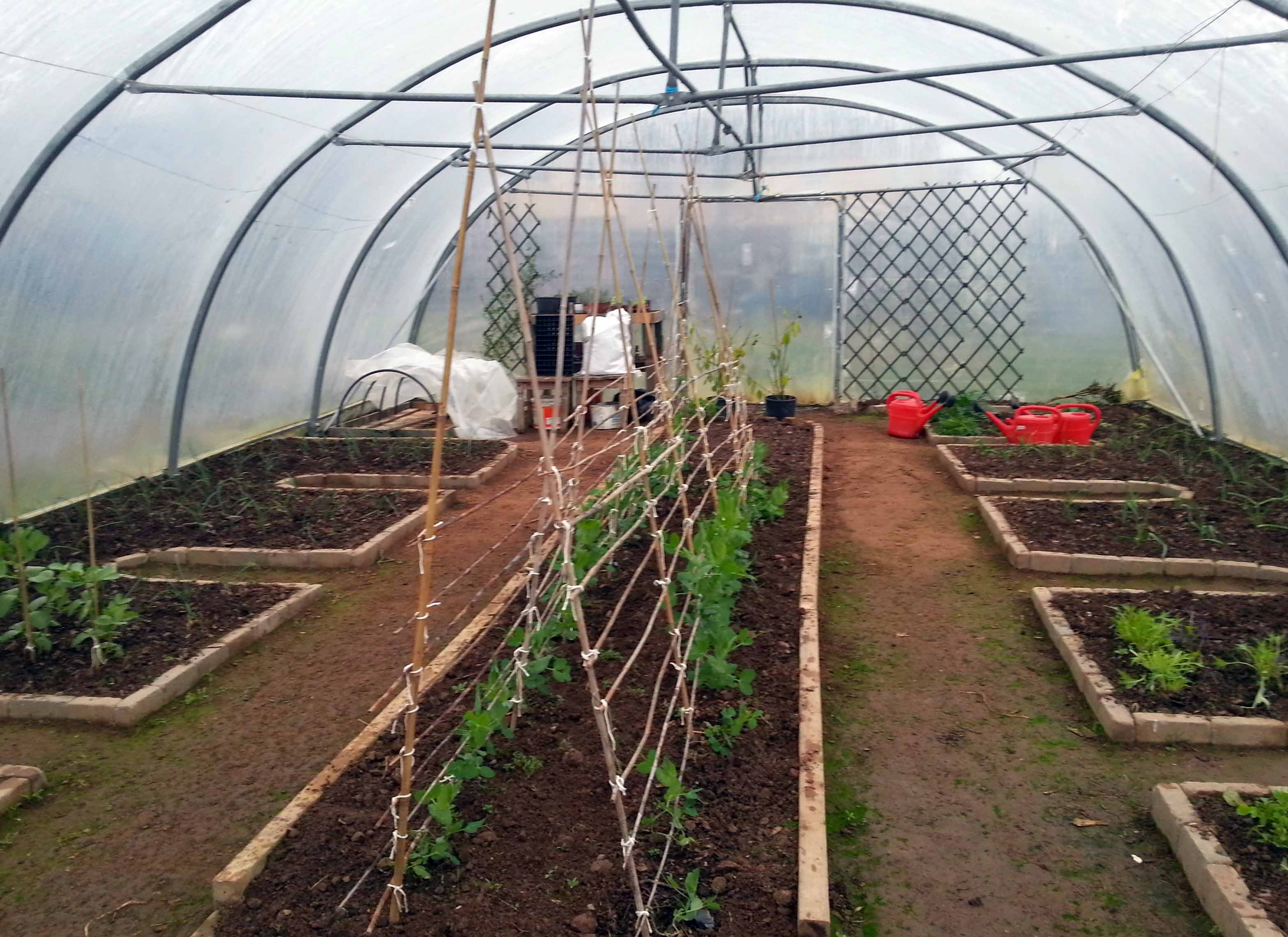 Polytunnel Layout In A Community GardenGreenside Up