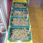 Heated Propagating Tray – Review