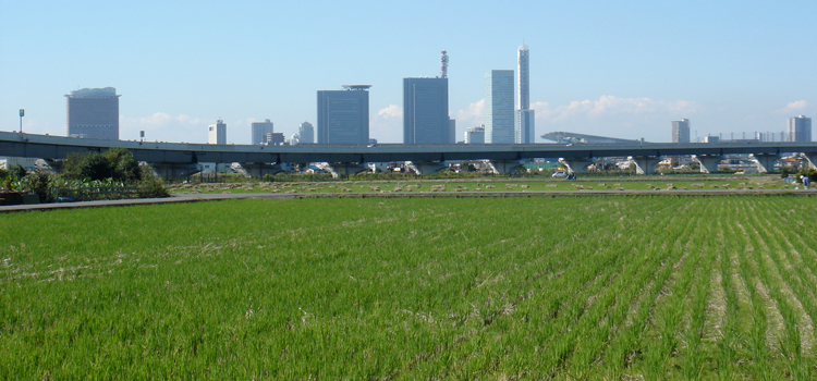 Urban Agriculture in Tokyo