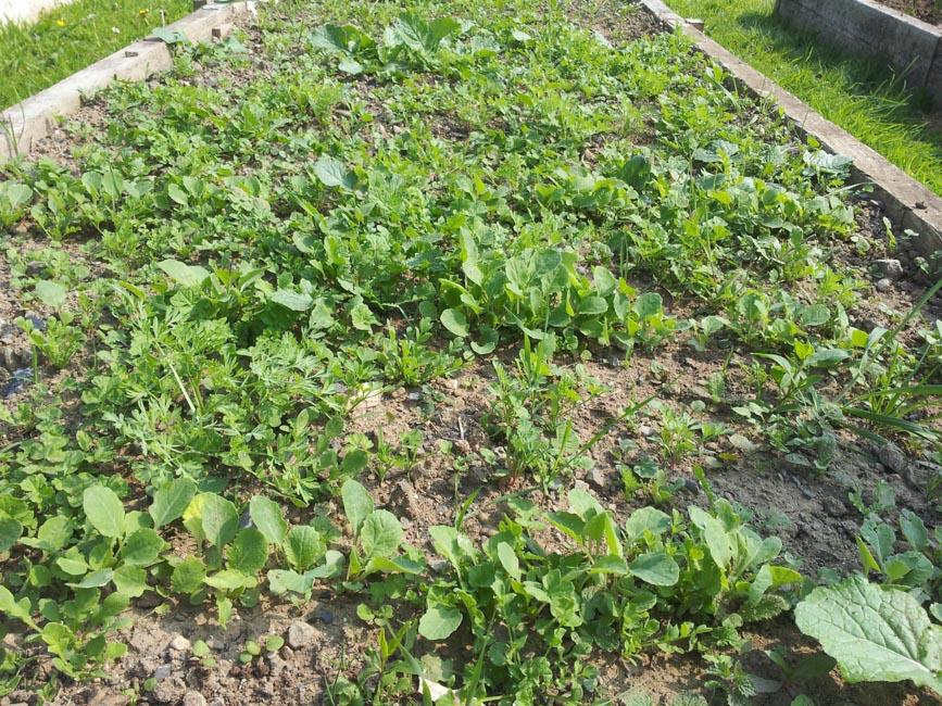seeds & weeds