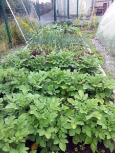 Small Garden at Droichead Family Resource Centre