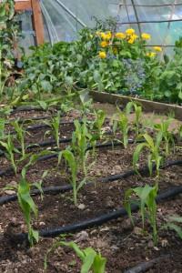 Start Up Essentials for Community Gardens   Greenside Up