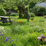 Supporting Mental Health Needs with Horticulture