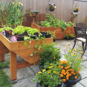 Growing Vegetables in Containers
