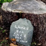 Weeding without Chemicals – What Are Your Options?