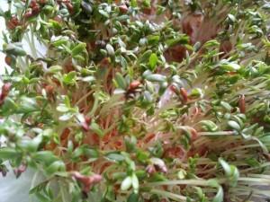 9 Winter Gardening Jobs We Can Do Indoors
