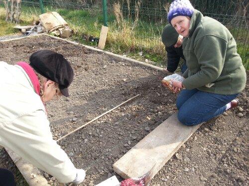 Planting onions at Callan Community Garden