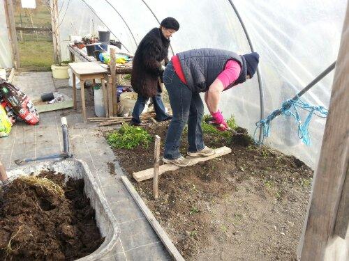 Inside the polytunnel at Callan Community Garden