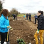 Working with new community gardeners at Kilkenny allotments & community gardens