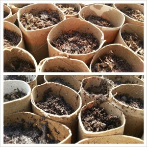 how to make compost from garden cuttings